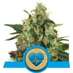 ROYAL QUEEN SEEDS - Medical Mass CBD