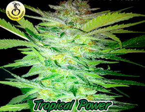 Tropical Power