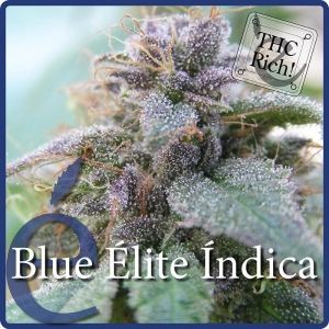 ELITE SEEDS - Blue Elite Indica