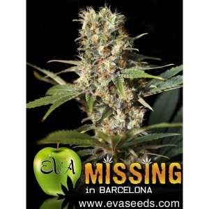 Missing in Barcelona