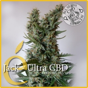 ELITE SEEDS - Jack Ultra CBD