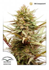 DUTCH PASSION - CBD ComPassion ®