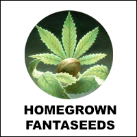 HOMEGROWN FANTA SEEDS
